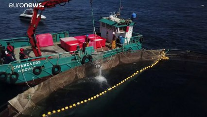 Pesca europea, una Ong critica le eccessive riduzioni fiscali