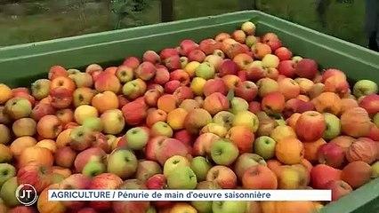 AGRICULTURE / Pénurie de main d'oeuvre saisonnière