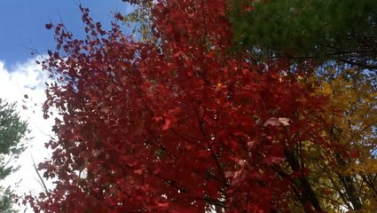 Why leaves change colors in the fall