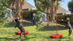 'Competitive French Bulldog plays swingball like a Pro'
