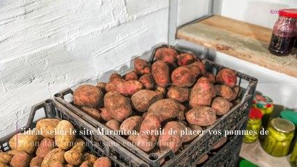 Pommes de terre germées : peut-on quand même les manger ?