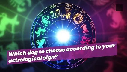 Which dog to choose according to your astrological sign?
