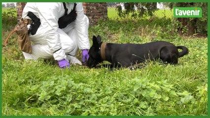 """Zennah, le premier chien """"moeurs"""" de Belgique"""