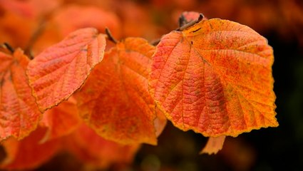 Facts about fall that you may not know