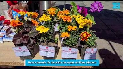 Nueva jornada de donación de sangre en Plaza Moreno