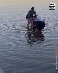 Kangaroo Rescued From Freezing Cold Lake
