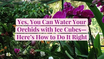 Yes, You Can Water Your Orchids with Ice Cubes—Here's How to Do It Right