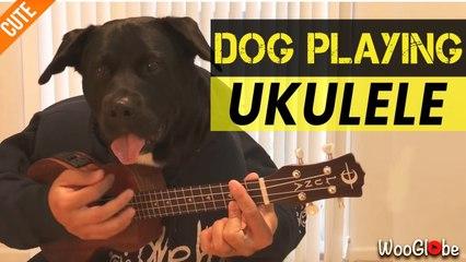 'Music-loving dog plays ukulele... but not really!'