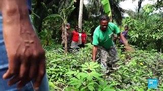 Au Nigeria, la forêt de l'État de Cross River menacée par l'activité humaine