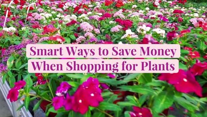 10 Smart Ways to Save Money When Shopping for Plants