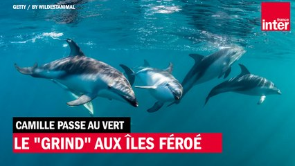 """Le """"grind"""" aux Îles Féroé"""