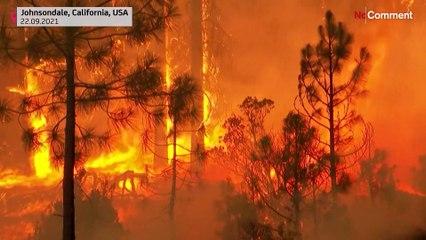 شاهد: فرق الإطفاء تهب لحماية أشجار السيكويا العملاقة من الحرائق في غابات كاليفورنيا