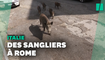 À Rome, une famille de sangliers fait sa balade digestive dans le centre
