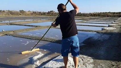 Ramassage du gros sel sur l'ile-de-Ré