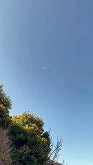 Vidéo : Un corbeau attaque un drone de livraison (Australie)