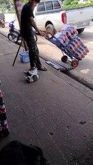 Un chat aide un humain à transporter des bouteilles
