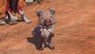 Le premier DLC gratuit de New Pokémon Snap est désormais disponible