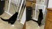 'Confused cat tries to think of the best way to get past the baby gate'