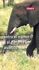 ¿Se podría resucitar a los mamuts? Algunos científicios creen que sí, pero no está claro...