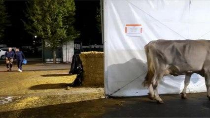 Au cœur du Sommet de l'élevage 2021 à Clermont-Ferrand