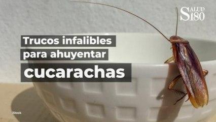 ¡Trucos infalibles para ahuyentar cucarachas! | Salud180
