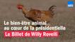 Le bien-être animal au cœur de la présidentielle - Le billet de Willy Rovelli