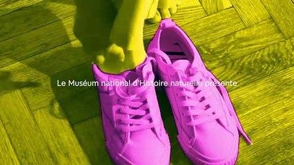 """Teaser de l'exposition""""Sneakers, les baskets entrent au musée"""" de l'Homme à Paris"""
