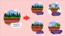 Stocker du carbone dans les écosystèmes : agriculture, le champ des possibles