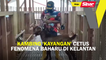 Kambing 'kayangan' cetus fenomena baharu di Kelantan