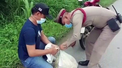 อ่างทอง ตำรวจพบงูเหลือมตัวขนาดใหญ่เลื้อยข้ามถนนติดแบริเออร์แจ้งกู้ภัยจับ