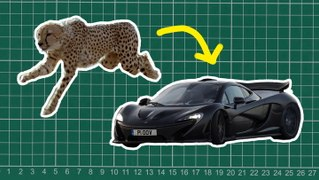 How nature inspired the design of the McLaren P1 and Mini Cooper