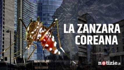 La zanzara coreana (che resiste al freddo) arriva in Lombardia: rischi e come proteggersi