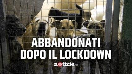 """Animali, Enpa lancia l'allarme: """"Troppi cuccioli abbandonati a fine lockdown"""""""