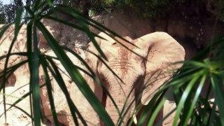 La caza furtiva propicia la evolución de elefantes sin colmillos