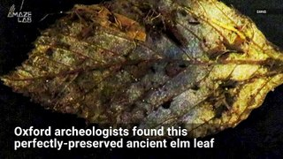 This 6,000-Year-Old Leaf Is Found in Perfect Condition