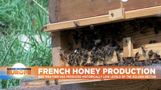 Honey harvest expected to decline dramatically in France