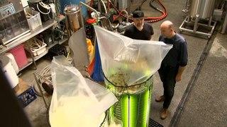 Sydney brewery using algae to capture carbon emissions