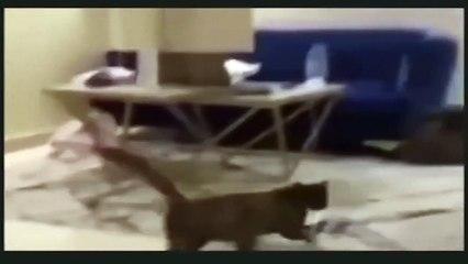 Ils vont chercher un chat errant pour qu'il attrape une souris entrée chez eux !