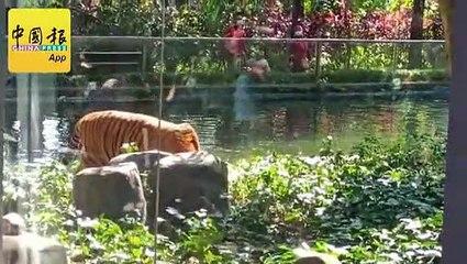146吨走私肉类被扣 狮子老虎分到大餐吃