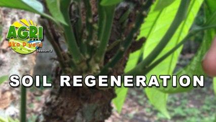 Soil Regeneration