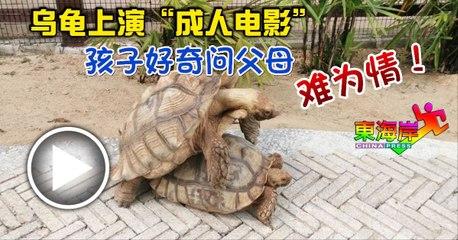 """乌龟上演""""成人电影"""" 孩子好奇问父母难为情!"""