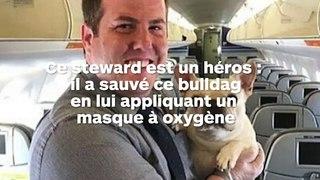Un bulldog français sauvé en avion grâce au masque à oxygène