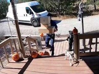 Ce livreur tombe à cause d'une citrouille d'Halloween et ça ne le fait pas rire !