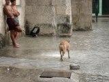 chien qui joue avec l'eau qui ruisselle à La Havane, Cuba