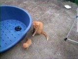 un chat qui a peur d'un chaton