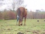 éthologie avec cheval