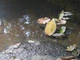 Sidobre 9 octobre 2006