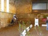Etalons Poney Haras du PIn Mars 2008 LEOPARD DE MAHOUD 3