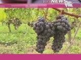 Chateau Ausone vin wine