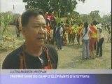 Thailande fête des Elephants 13/03/08